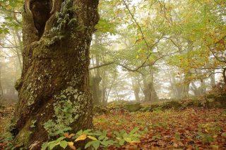 🍂🍁Mira el lado bueno del otoño!! Siempre nos trae paisajes espectaculares.  🍂🍁Mira o lado bo do outono!! Sempre nos trae paisaxes espectaculares.